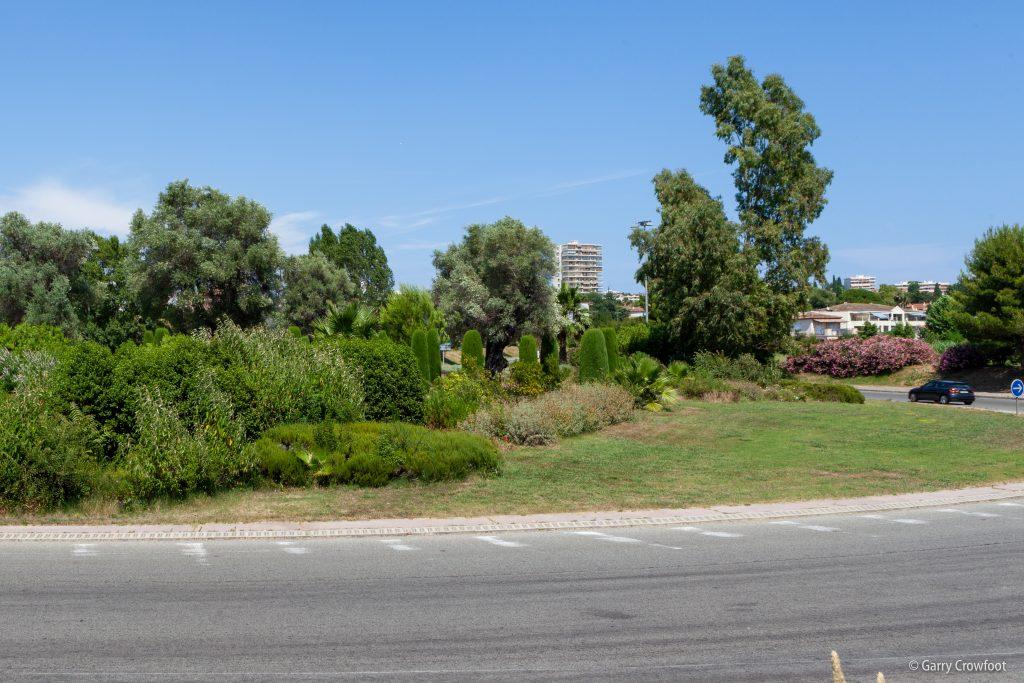 Rond Point Eucalyptus Antibes