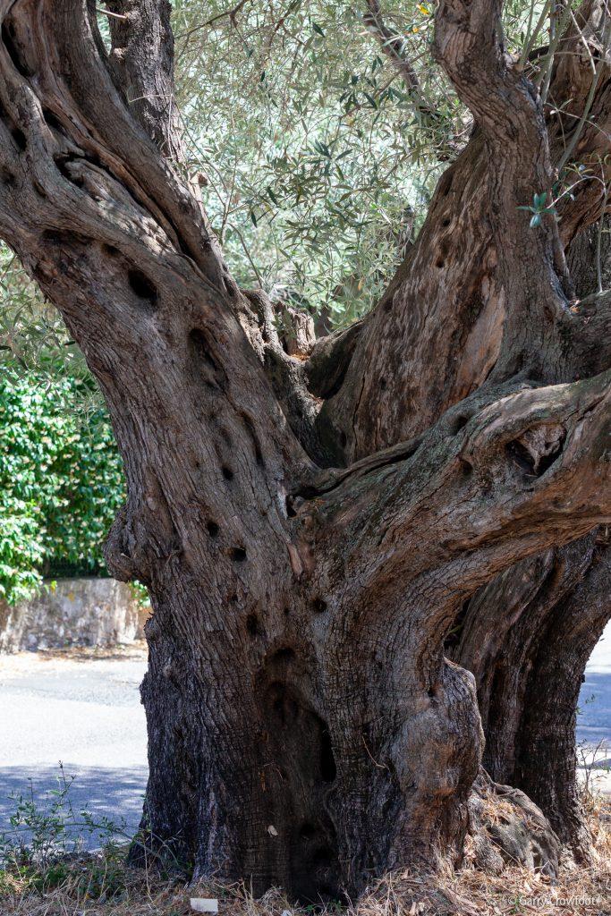 olivier chemin Pinède Antibes 2021
