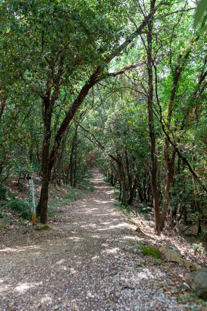 Chênes chemin du Forêt Antibes