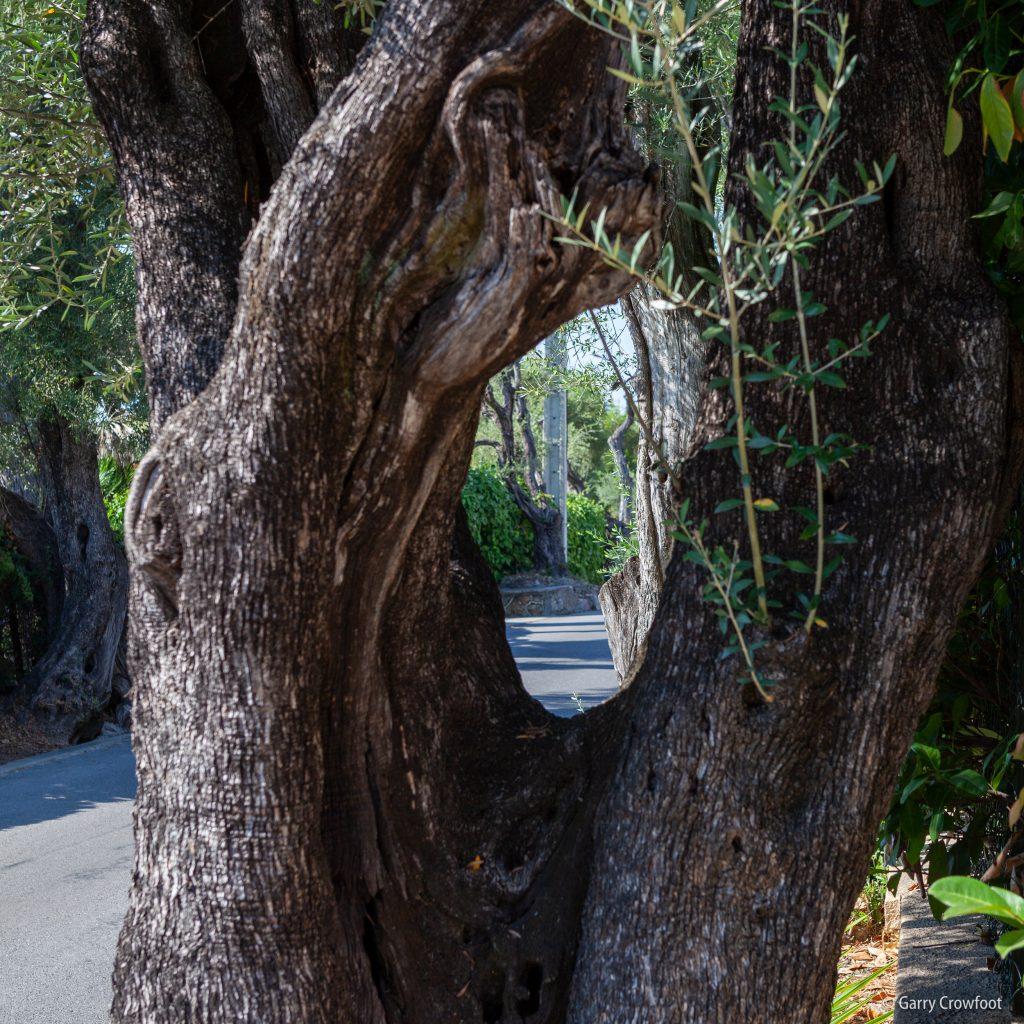 Avenue des Oliviers Antibes